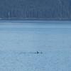 "Taken at Latitude/Longitude:56.828454/-134.499075. 23.74 km South Tyee Alaska United States <a href=""http://www.geonames.org/maps/google_56.828454_-134.499075.html""> (Map link)</a>"