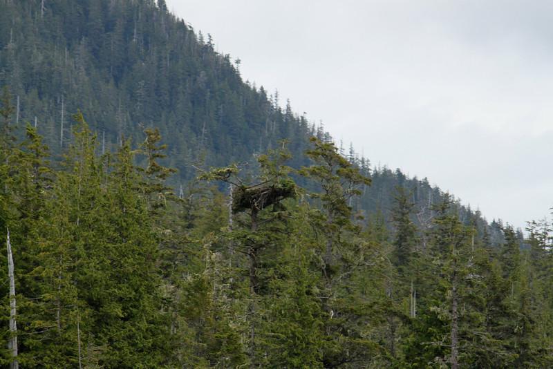 A bold eagle nest