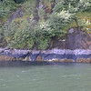 Glacial rock, Misty Fjords near Ketchikan