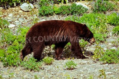 Alaska Trip Day 10-182