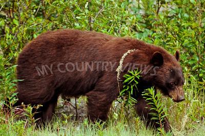 Alaska Trip Day 10-164