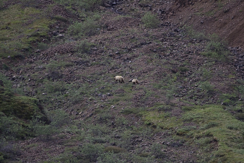 Mom and Cub in Denali NP