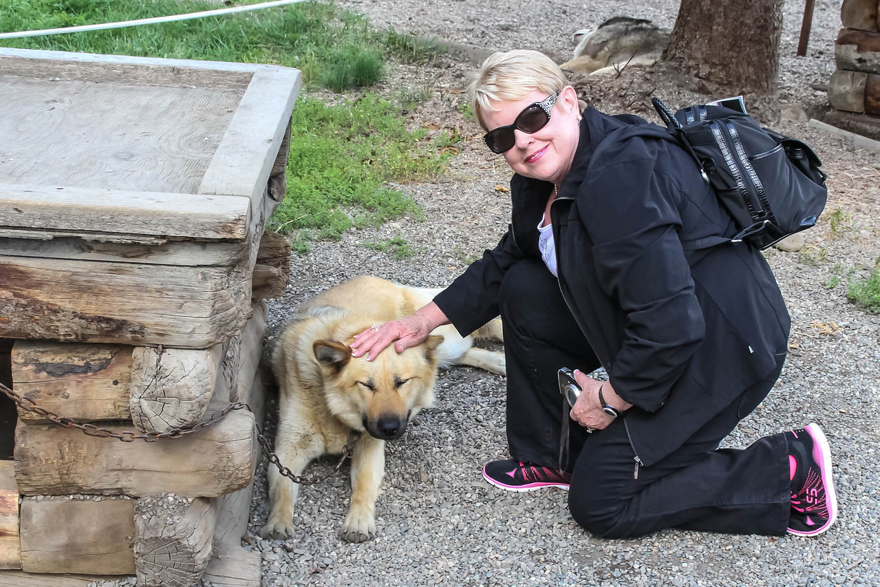 Alaskan Husky Sled Dogs - Denali NP