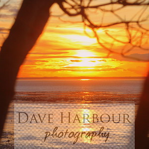 Tree-Inlet Sunset Winter Solstice 2012 by Dave Harbour-79