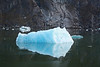 A gorgeous blue iceburg floating in the waters of Tracy Arm.