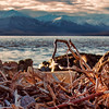 Cook Inlet Alaska Shortly after Dawn