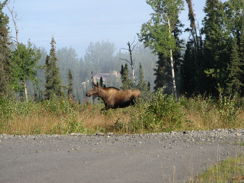 Our first moose sighting!!