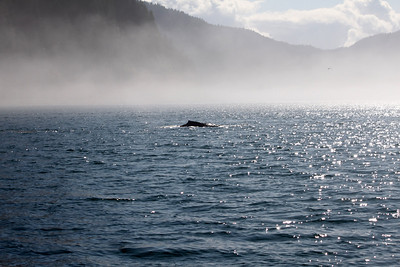 Whale watching in the fog, Glacier Bay.