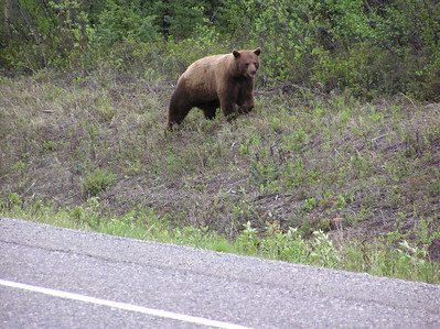 Our Alaska Welcome Bear.