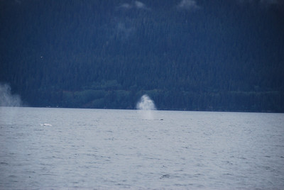 Whale watching in the waters near Juneau.  Thar she blows!