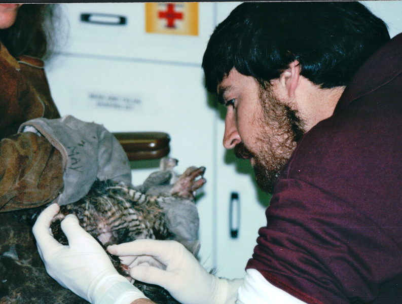 Vet Working on Injured Owl That Was Brought In - Alaska Raptor Rehab Center - Sitka, Alaska<br /> Alaska Inside Passage Cruise - Seward, Alaska to Vancouver, Canada - Holland America Cruise Lines  - May 17-24, 1998