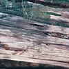 Frequent Rains Carve Notches in Fallen Trees - Mountain Lake Canoe Adventure - Ketchikan, Alaska<br /> Alaska Inside Passage Cruise - Seward, Alaska to Vancouver, Canada - Holland America Cruise Lines  - May 17-24, 1998