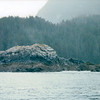 View From Ship - On Way to Juneau, Alaska<br /> Alaska Inside Passage Cruise - Seward, Alaska to Vancouver, Canada - Holland America Cruise Lines  - May 17-24, 1998