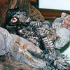 Injured Owl That Just Arrived - Alaska Raptor Rehab Center - Sitka, Alaska<br /> Alaska Inside Passage Cruise - Seward, Alaska to Vancouver, Canada - Holland America Cruise Lines  - May 17-24, 1998