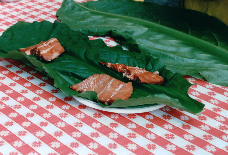 Smoked Salmon on Skunk Cabbage - Mountain Lake Canoe Adventure - Ketchikan, Alaska<br /> Alaska Inside Passage Cruise - Seward, Alaska to Vancouver, Canada - Holland America Cruise Lines  - May 17-24, 1998