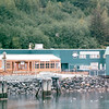 Downtown Juneau, Alaska<br /> Alaska Inside Passage Cruise - Seward, Alaska to Vancouver, Canada - Holland America Cruise Lines  - May 17-24, 1998