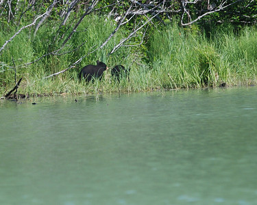 Black Bear Cubs View from fishing boat