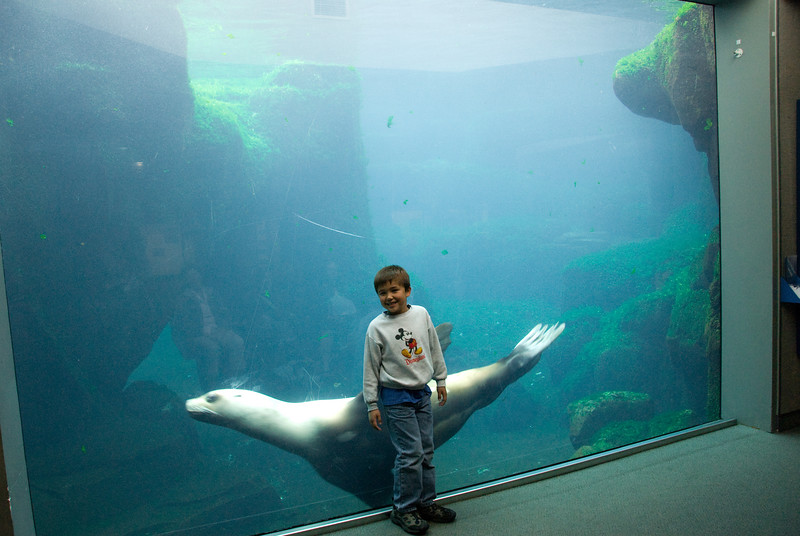 This sea lion was quite playful, and enjoyed interacting with people through the glass.  He purposely startled Ethan a couple times.