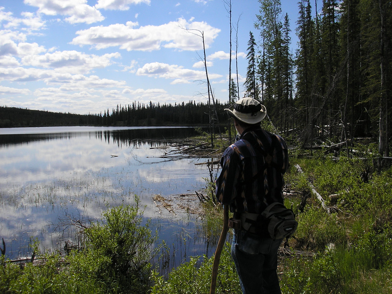 This is Deadman Lake and the muskeg growth along the shore.Muskeg is a bog of sorts, the plants grow very dense and make a spongy soil that is wet all summer.
