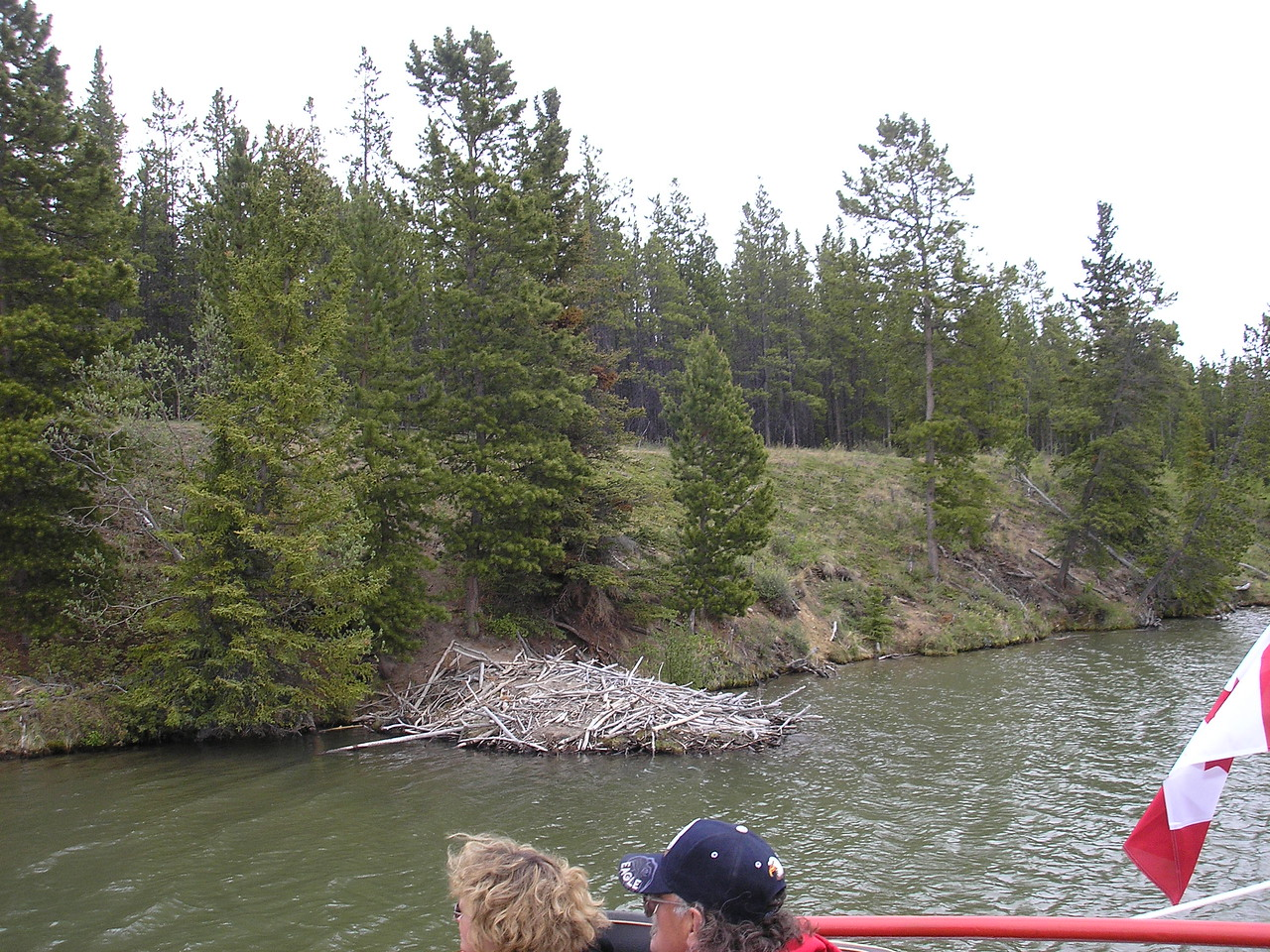 An old Beaver Den is along the bank of the Yukon River.