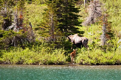 Alaska Trip Day 4-493