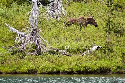 Alaska Trip Day 4-495