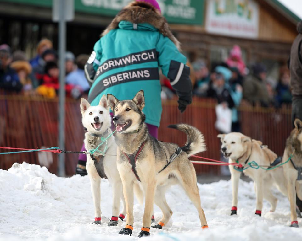 Team 59 - 2011 Iditarod Ceremonial Start - Anchorage - Alaska - USA
