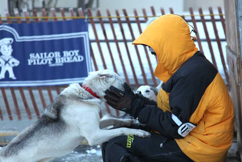 2011 Iditarod Ceremonial Start - Anchorage - Alaska - USA