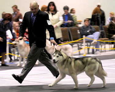 Alaska Kennel Club Dog Show - 01.23.2011 - Anchorage - Alaska - USA