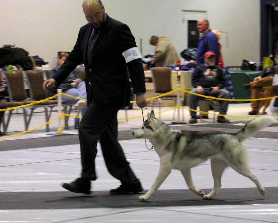 Alaska Kennel Club Dog Show - 01.23.2011 - Anchorage - Alaska - USA