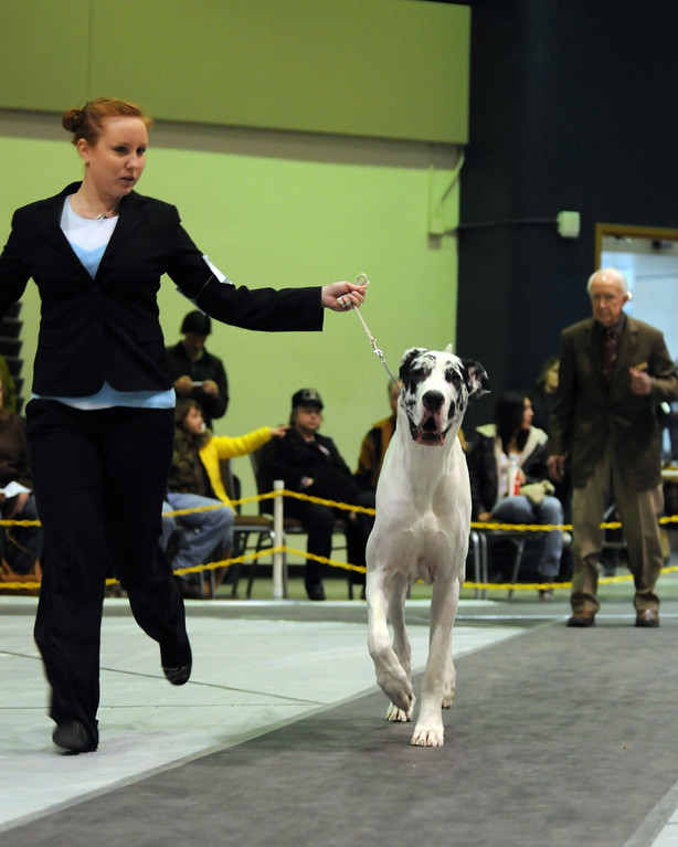 Alaska Kennel Club Dog Show - 01.23.2011 - Linkin - Anchorage - Alaska - USA