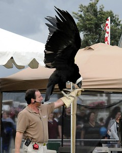 2010 Alaska State Fair - Exhibits - Birdman - Palmer Fairgrounds - Palmer - Alaska - USA