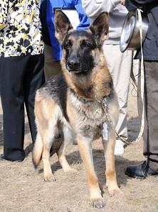 Buddy - Hero - German Shepherd - Award Ceremony - Anchorage - Alaska