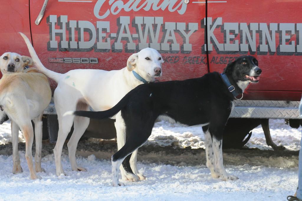 Fur Rondy 2011 - World Championship Sled Dog Races - Anchorage - Alaska - USA