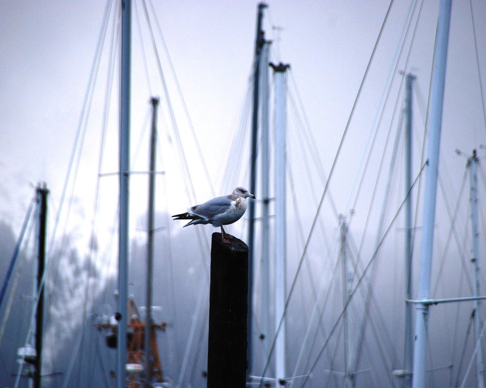 Sea Gull - Seward, Alaska