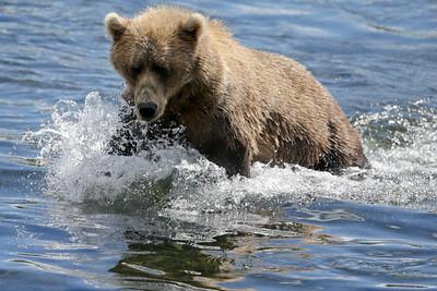 Bear-4878