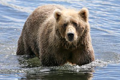 Bear-4625
