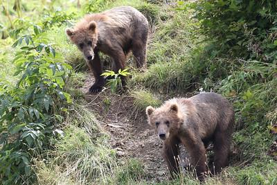 Bear-4711