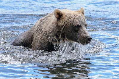 Bear-4425