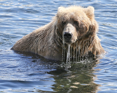 Bear-5277
