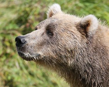 Bear-4925