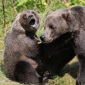 Bear-5217