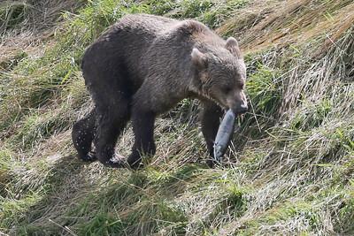 Bear-5056