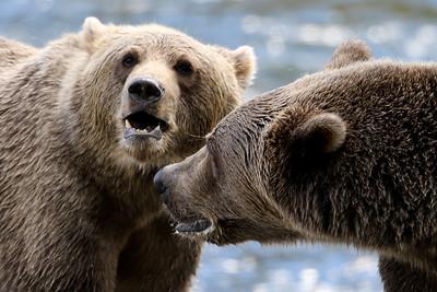 Bear-4732