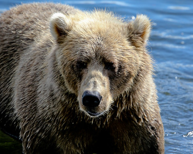 Bear-5139