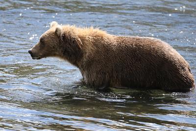 Bear-4875