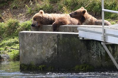 Bear-4649
