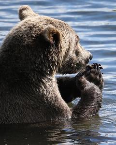 Bear-5261