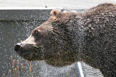 Bear-4458