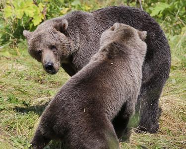 Bear-5225
